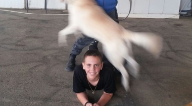 playing with a dog